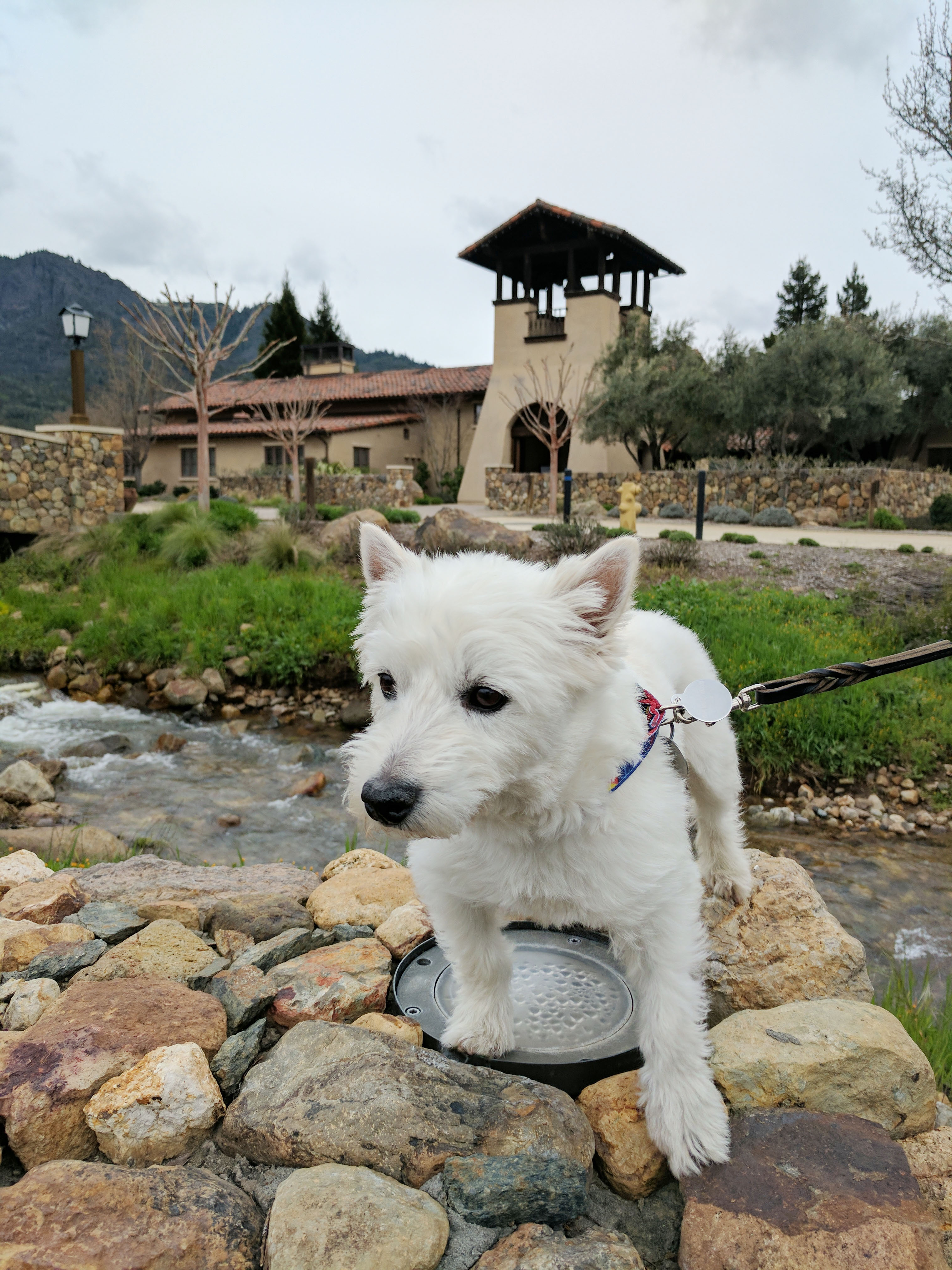 Ernie at St. Francis Winery. Photo Credit: Kimberly Paternoster