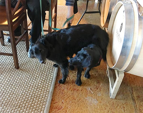 Bella and 4 month old Pepper at Viszlay Winery <br> Photo Credit: Lark Schumacher Coryell