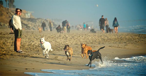 Where To Find Rescue Dogs Huntington Beach