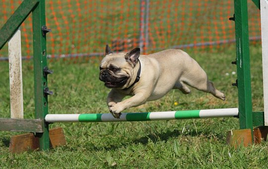 dog jumping over pole