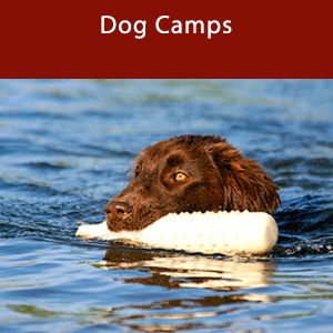 Dog Camps