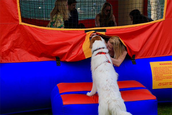 Dog in bouncy house