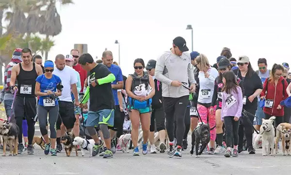 Doggy Dash 5k/10k for a cause