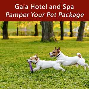 Gaia Pet Package