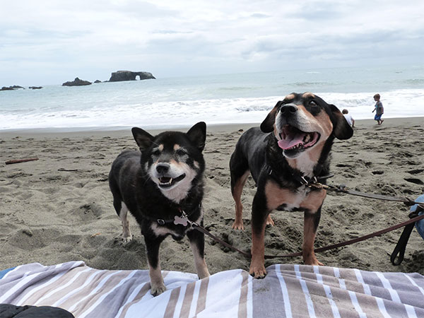 Mei Mei and Mimi at the beach