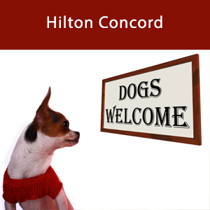 Dog-friendly Hilton Concord
