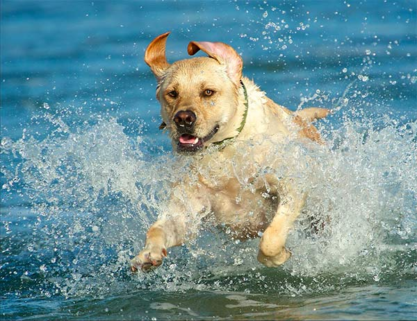 Dog splashing in the waves at beach