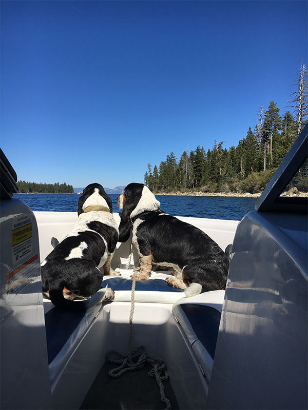Hounds in Tahoe