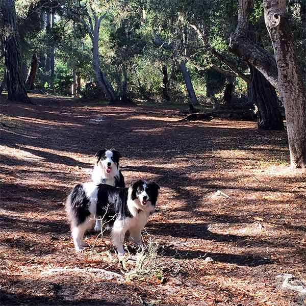 Dogs at Rip Van Winkle Open Space