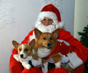 Dogs on Santa's lap