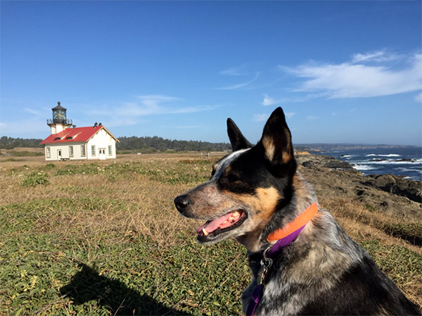 Dog at Point Cabrillo