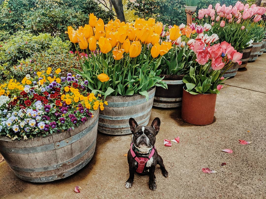 dog-friendly ironstone vineyards