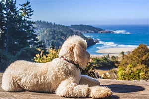 Mendocino County: A Winter's Tale for You And Your Dog