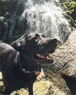 Waterfalls and Wildflowers With Your Dog