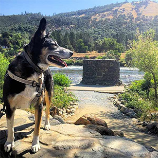 Golden Opportunities for DogTrekkers in the Gold Country