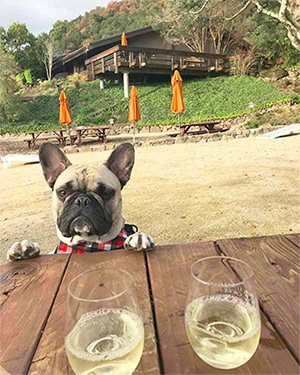 Dogs, Wine and Fun