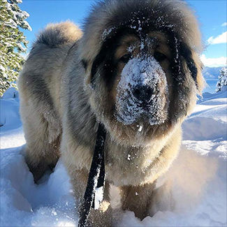 Snow Down With Your Dog at Lake Tahoe