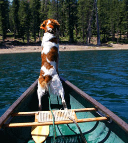 Paddles and Paws