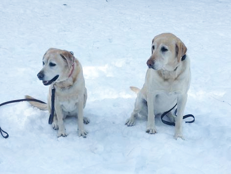 Dogs' first trip to the snow
