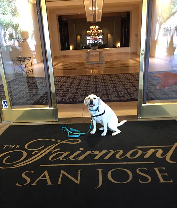 Maya at The Fairmont San Jose