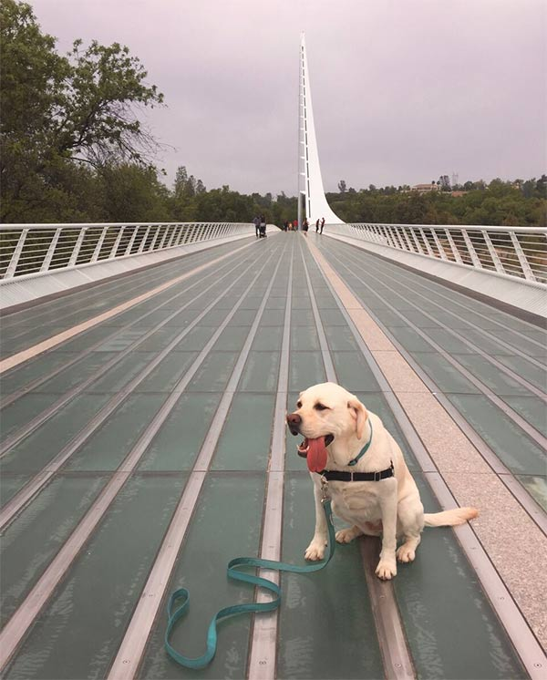 Maya at Sundial Bridge, Redding