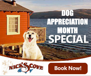 Dog Appreciation Month Special