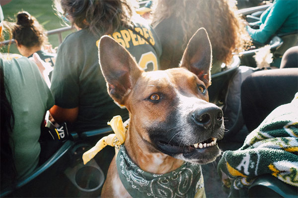 Oakland Athletics: Bark in the Park