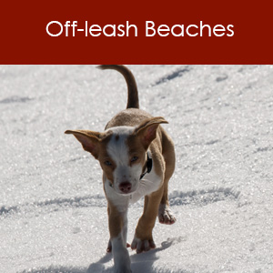 Off-leash Beaches