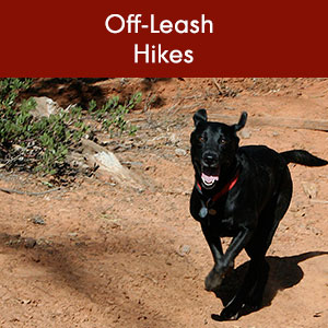 Off Leash Hikes