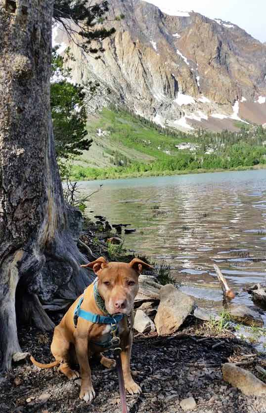 Ginger at Parker Lake. Photo Credit: Stacy D.