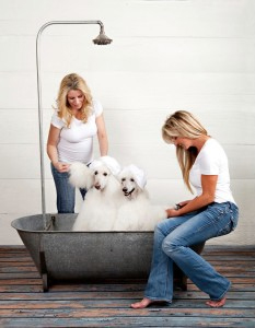 Pawfect pet grooming