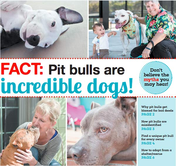 Information on pit bulls and why they are great dogs