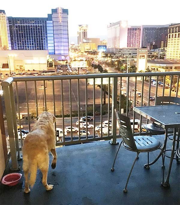 Rina Loves To Be Outdoors So A Hotel With Balcony Was Of Utmost Importance Not Too Many Hotels In Vegas Have Balconies But The Platinum Does