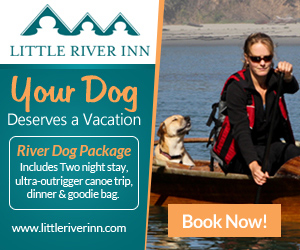 Little River Inn River Dog