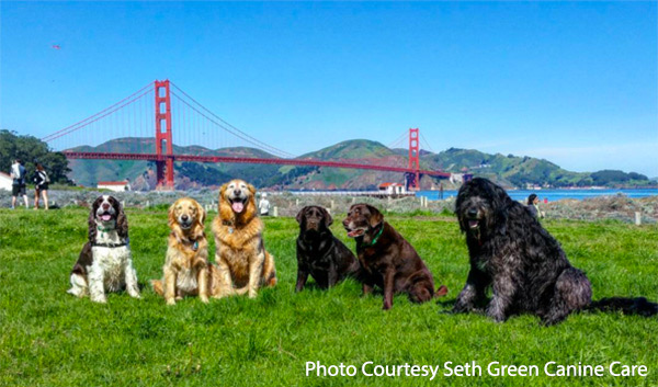 Dogs at Crissy Field