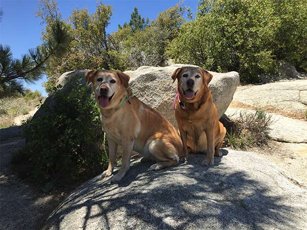 Dog-friendly Idyllwild, CA