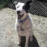 ShaNe. Photo courtesy Hopalong and Second Chance Animal Rescue