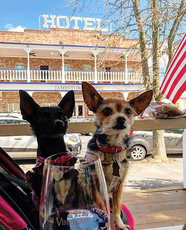 dog-friendly tuolumne County Wine & Craft Beer Trail