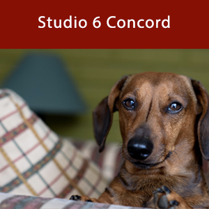 Dog-friendly Studio 6 Concord