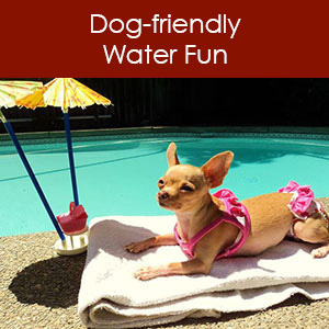 Water activities with your dog