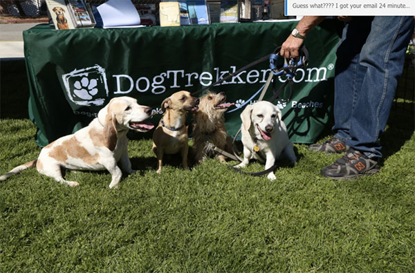 Woofstock dogs at DogTrekker.com booth