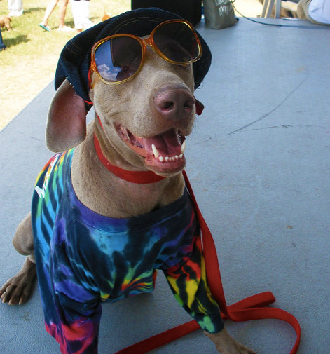 Woofstock dog